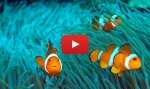 Underwater videos from Bali